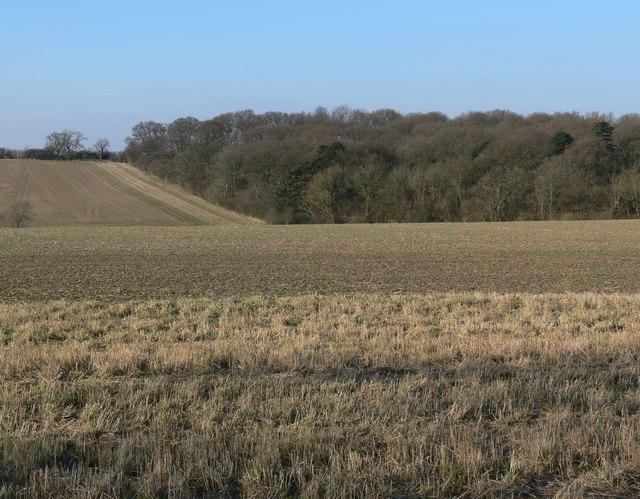 Farmland near Botany Bay Fox Covert
