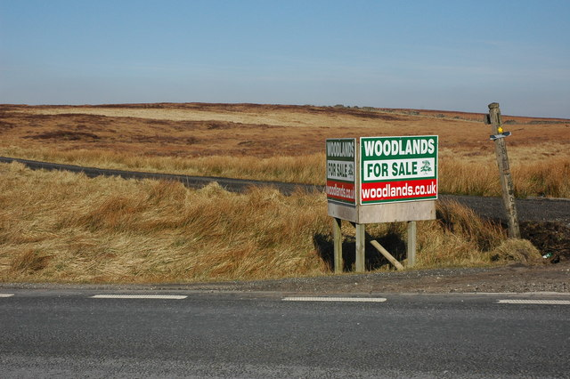'Woodlands For Sale' near the Cat and Fiddle Inn