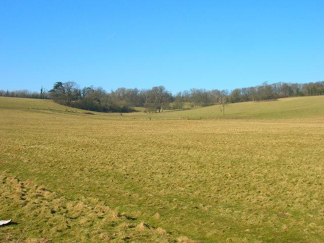 Downland near University of Sussex