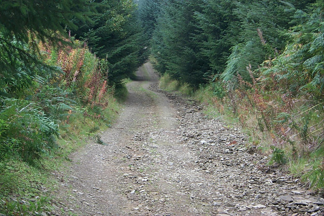 Radnor Forest - Bridleway - forestry track