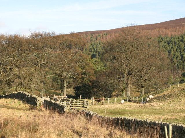 Sheepfold near Knock Shield