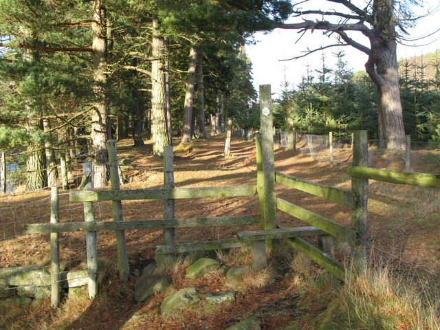 Footpath through the pines on the east bank of the River East Allen