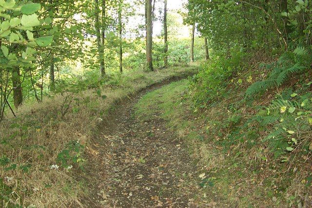 Radnor Forest - Forest Wood