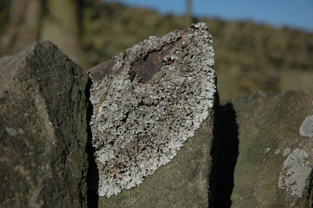 Lichen on a dry stone wall