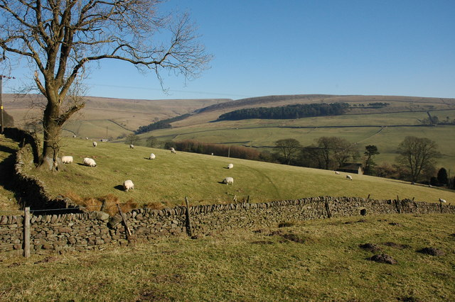 Sheep grazing at Shutlingsloe Farm