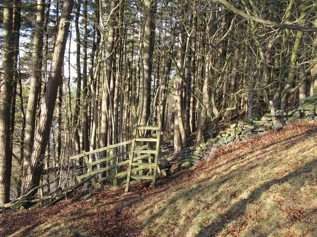 Footpath into Sipton Plantation