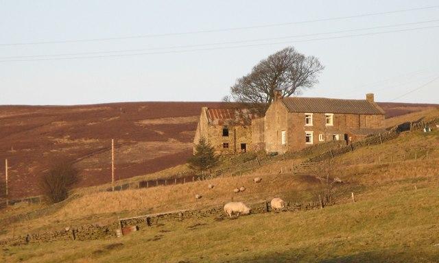 Pastures below Tedham