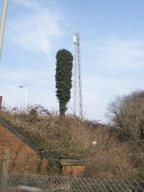 Tree apeing the mast