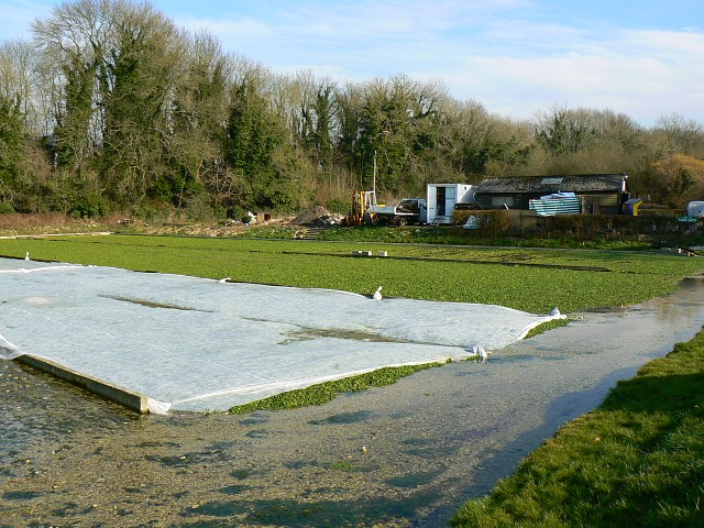 West Lea watercress beds, Itchen Stoke, Hampshire