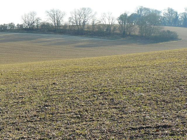 Farmland and trees, near New Alresford