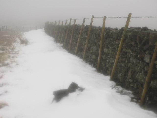 Footpath on Sedling Fell