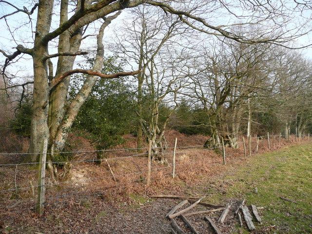Edge of Pannelridge Wood