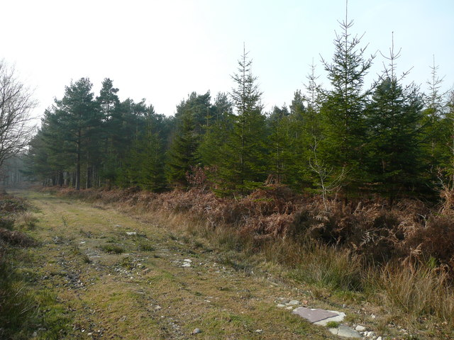 Track and stand of conifers