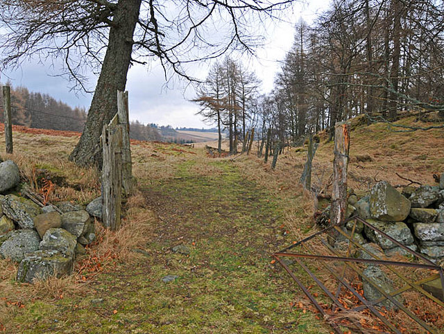 Hill track with ruined drystane dyke