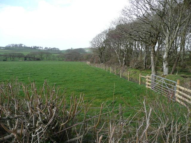 Beech woodland near East Balsdon
