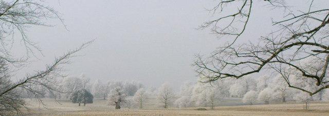 Hoar Frost in Studley Park