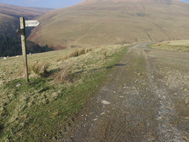 Track junction for Cogshead