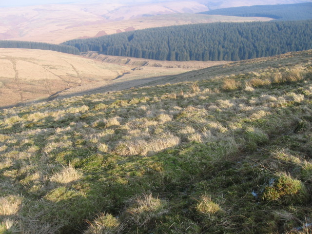 Wedder Dod hillside towards Glenbuie Burn