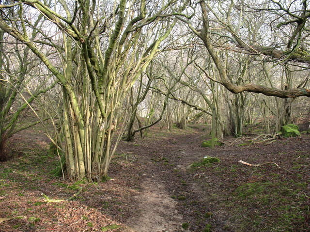 Path through Freeholders Wood