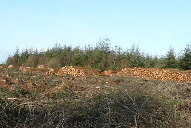 Trew Wood