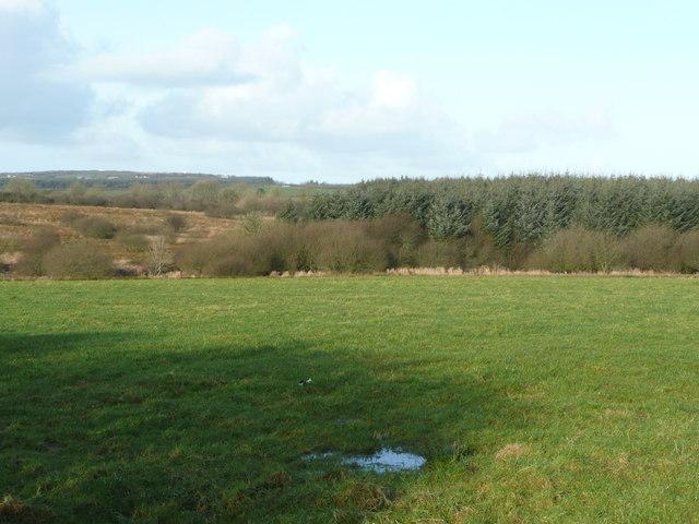 Field, moor, and wood