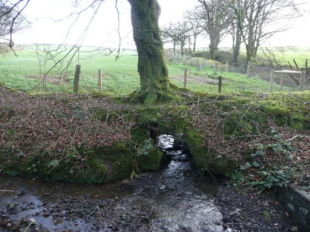 Stream under a tree