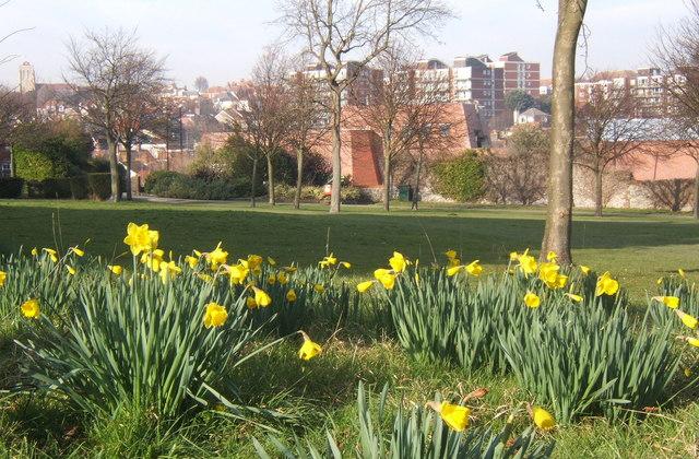 February daffodils, Gildredge Park, Eastbourne