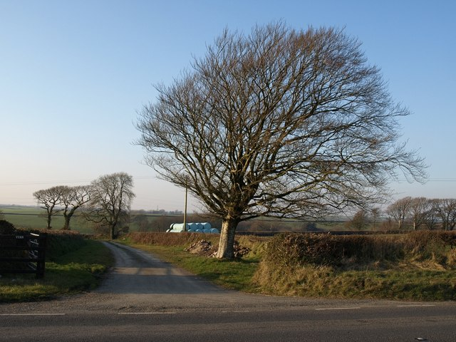 Beech and track to Venn Farm