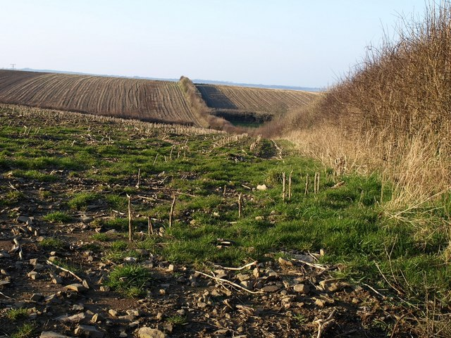 Fields near Thornewidger