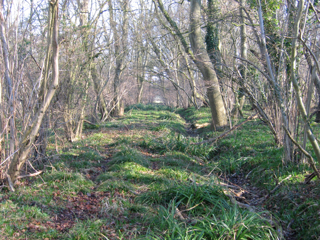 Cowage Wood, Hilmarton, Wilts