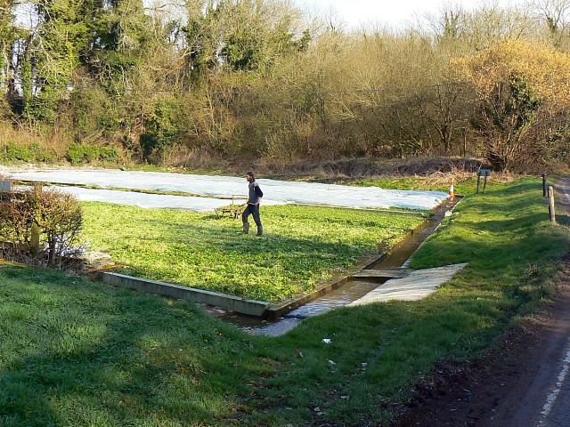 West Lea watercress beds, Itchen Stoke, Hampshire