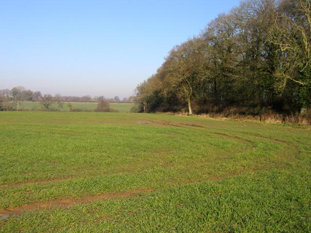 Six Acre Plantation, Pewsham, Wilts
