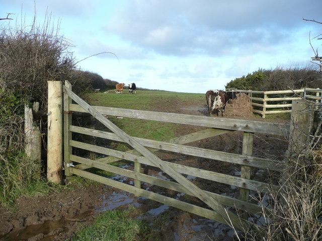 Beef pasture