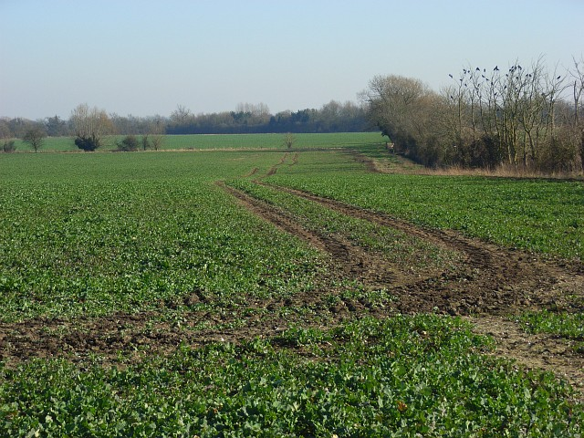 Farmland, Lyford