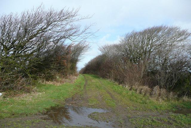 Devon Green Lane