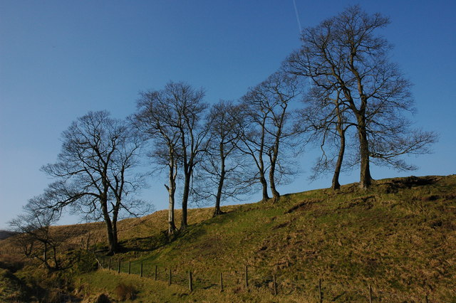 Trees in the Goyt Valley
