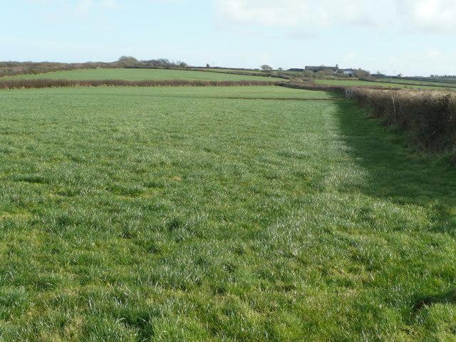 Grazing land near Baxworthy Farm