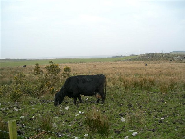 Cattle Grazing Land