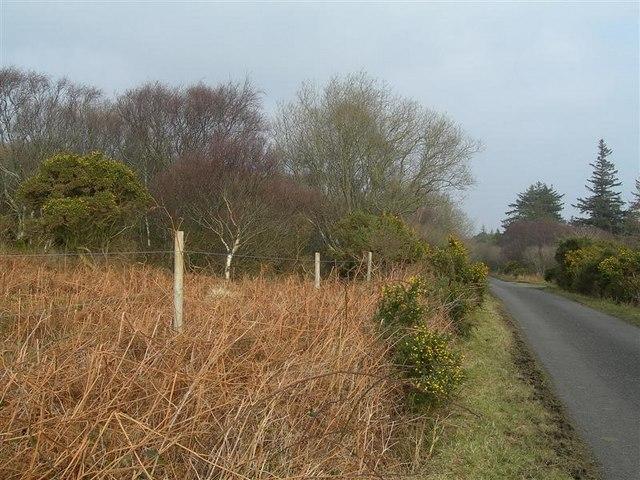 The Road To Kildalton