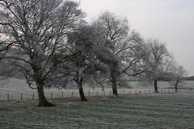 Frosty Trees Near Pinchinthorpe