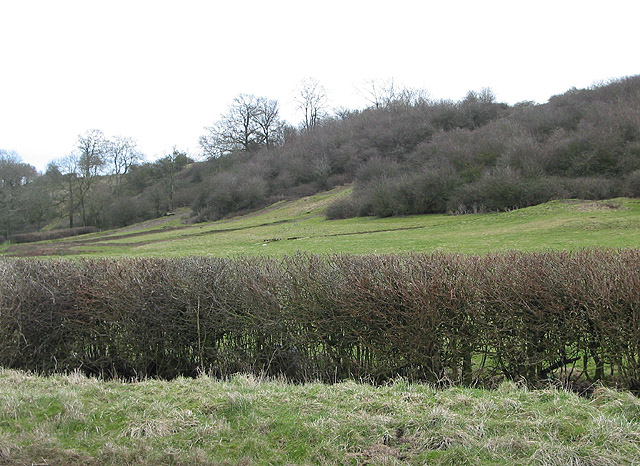 Slopes of Corse Wood Hill