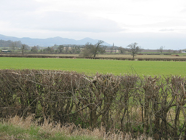 Flat farmland east of Staunton