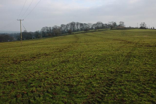 Field at Tissington