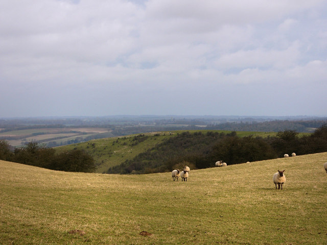 Looking towards Small Down from Salt Hill