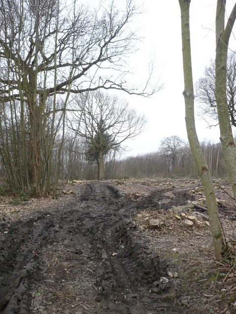 Woodland being cleared near Rodmersham Cricket Club