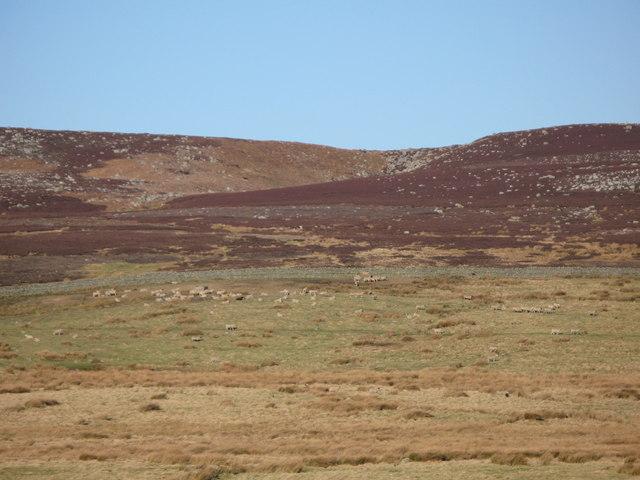 Pastures and moorland north of Harwood Shield