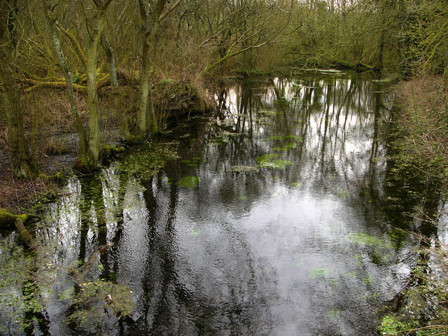 Millpond and springs, South Farm, near East Meon