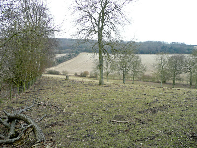 Wintergates Wood