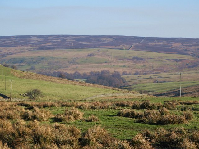 Pastures east of Harwood Shield