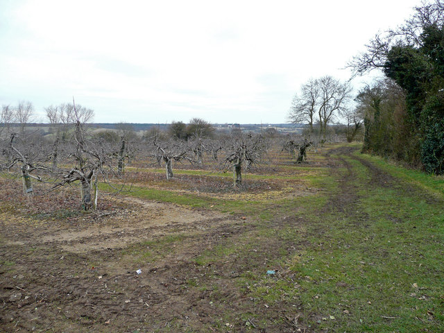 Old apple orchards